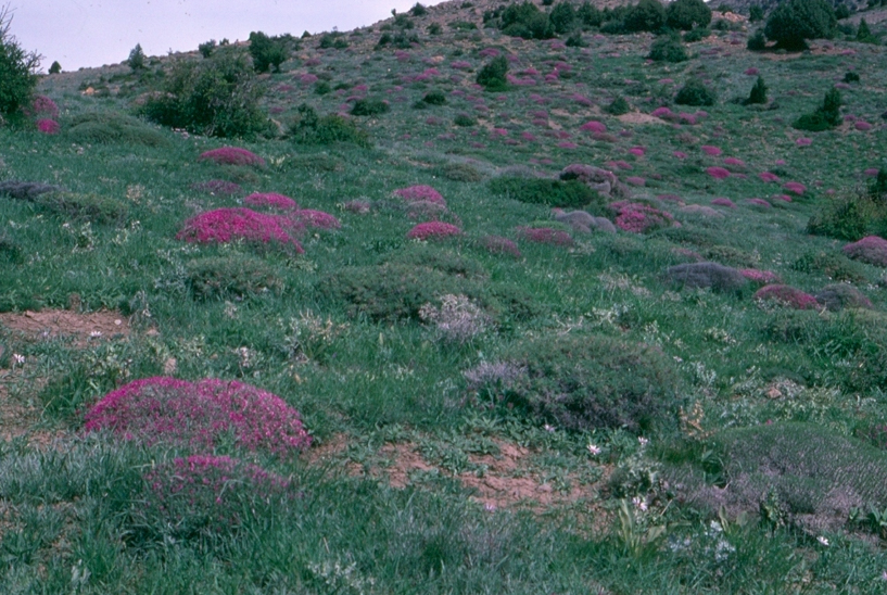 A Protected Area of an alpine range
