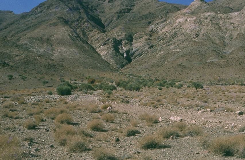 A poor range with Artemisia sp. and Amygdalus trees